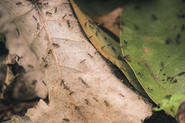 Ants, Close-up, Insects, Leaves