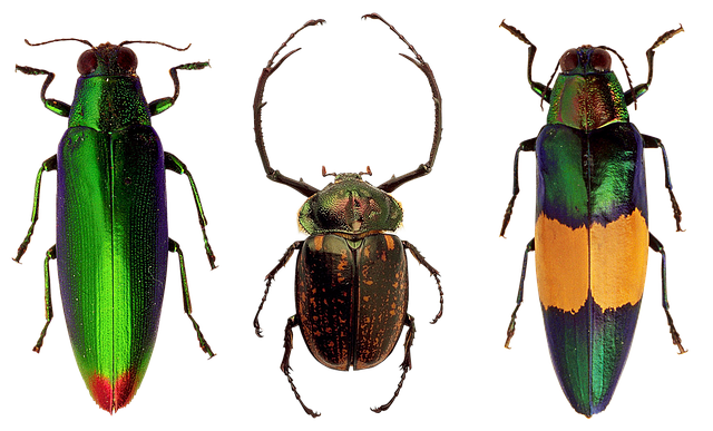Beetles, Insects, Nature, Macro, Flying Insect