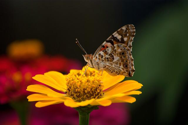 Nature, Butterfly, Insects, Flowers, Outdoors, Garden