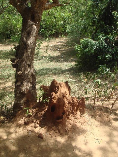 Termite, Sri Lanka, Ant Hill, Insects, Tree, Organic