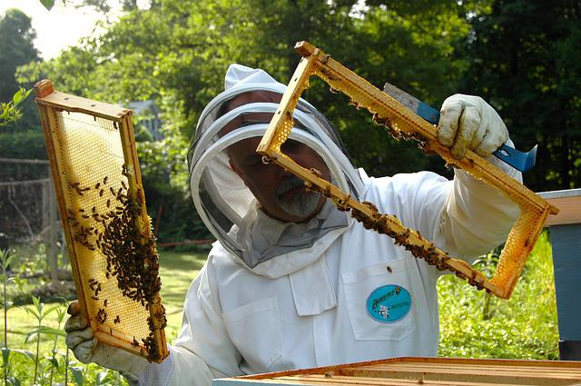 Beekeeper, Hive, Inspection, Beekeeping, Beehive, Bee