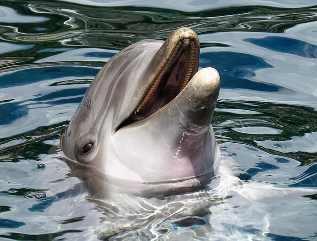 Dolphin, Sea, Marine Mammals, Wise, Intelligent, Free