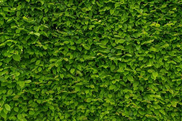 Intense Green Wallpaper With Hornbeam, Hornbeam, Hedge