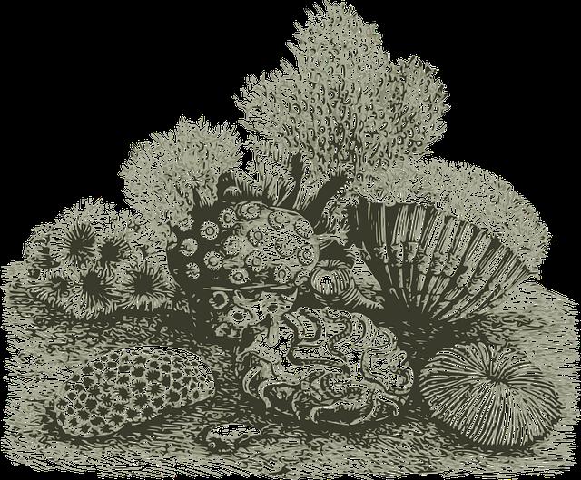 Coral, Invertebrate, Marine, Ocean, Reef