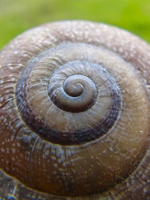 Snail, Seafood, Gastropod, Invertebrate