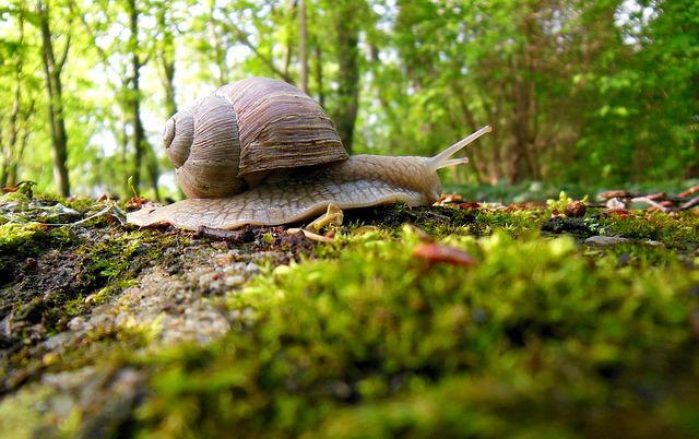 Snail, Forest, Molluscs, Biology, Crawl, Invertebrates