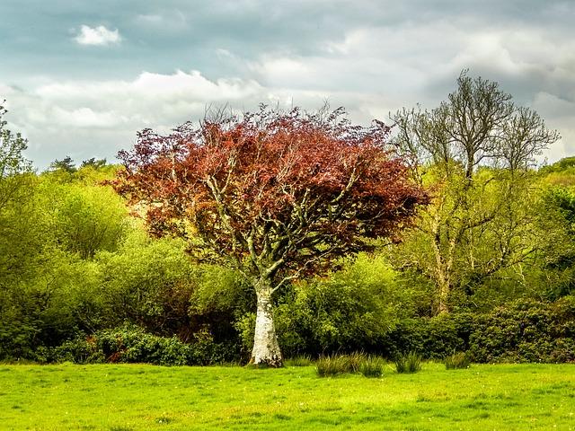 Tree, Green, Landscape, Nature, Field, Forest, Ireland