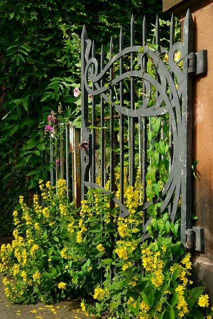 Goal, Iron, Old, Overgrown, Metal, Input, Iron Gate