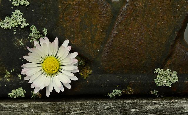 Daisy, Iron, Old, Weathered, Contrast, Bank, Structure