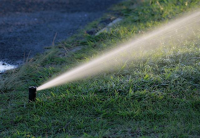 Water, Watering, Garden, Summer, Irrigation