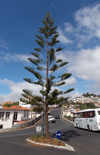 Madeira, Island, Funchal, Resort, Atlantic, Tree