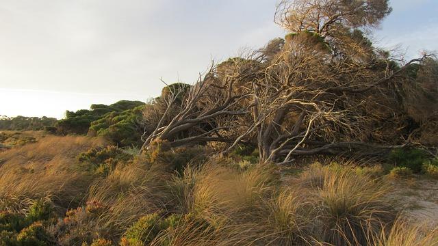 Rottnest Island, Island, Australia, Rottnest, Weathered