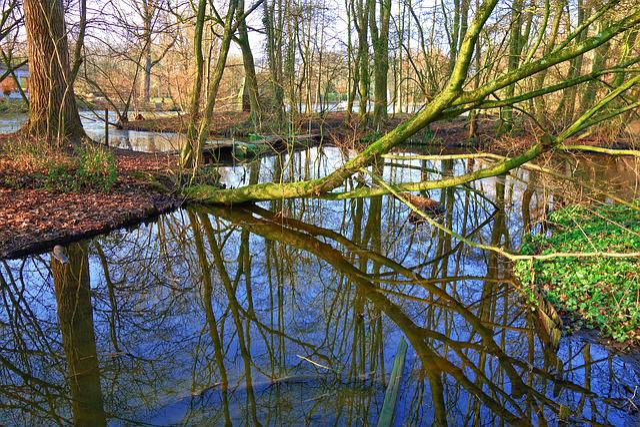 Tree, Water, Creek, Across, Reflection, Island, Park