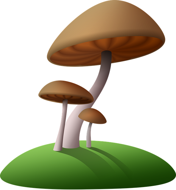 Mushrooms, Island, Cartoon, Fungus, Simple, Miniature