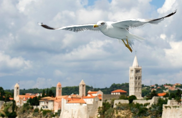 Island Of Rab, Seagull, Sea Birds