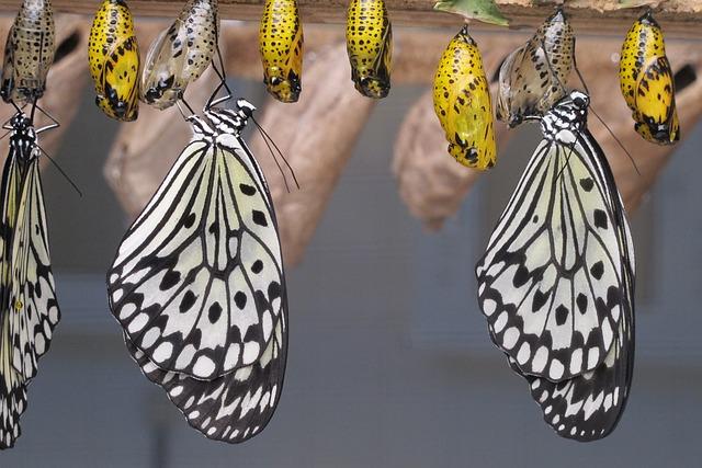 Butterflies, Islands, Canary Islands