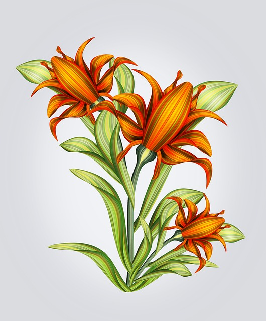 Flower, Drawing, Isolated, Background, Abstraction