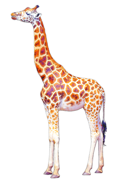 Giraffe, Isolated, Illustration, Long Neck, Drawing