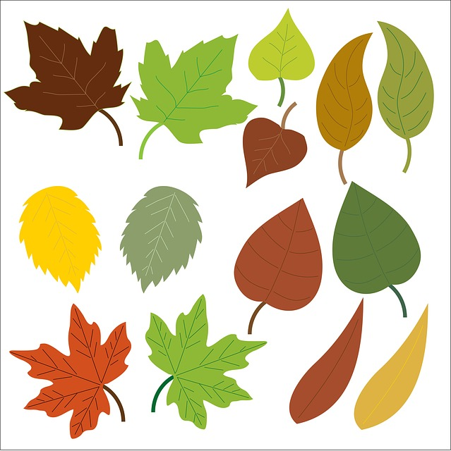 Leaf, Leaves, Oak, Maple, Green, Brown, Isolated, Icons