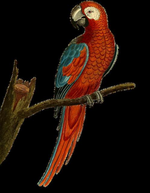 Bird, Parrot, Ara, Animal, Isolated, Vintage