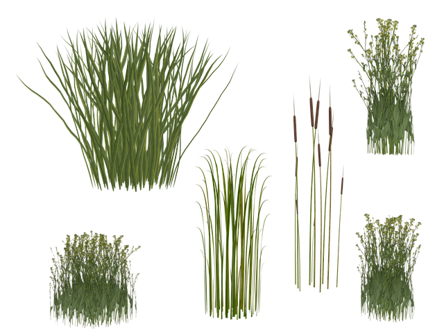Grass, Reed, Png, Isolated, Green, Grasses