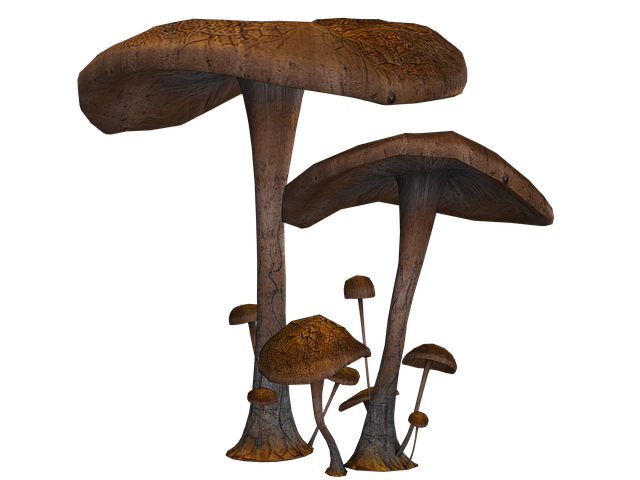 Mushrooms, Fantasy, Digital Art, Isolated, Png