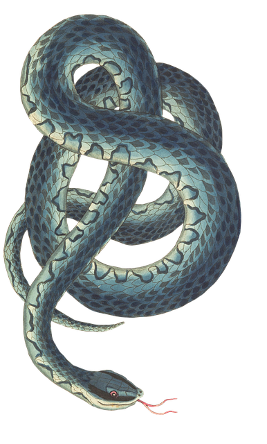 Snake, Reptile, Background, Isolated, Risk, Vintage