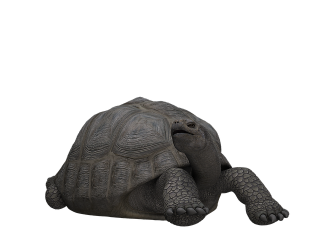 Turtle, Panzer, Animal, Mammal, Digital Art, Isolated