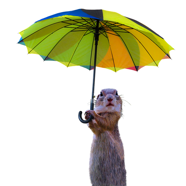 Animals, Meerkat, Isolated, Umbrella, Rain Protection