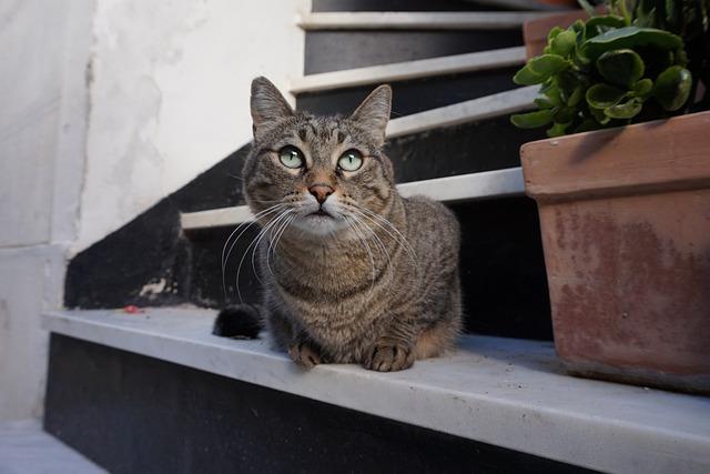 Cat, Italy, Gray Cat