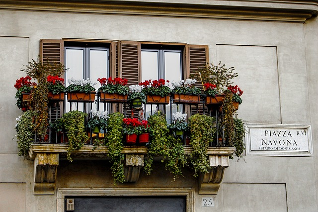 Flowerpot, Flowers, Italy, Piazza Navona, Rome, Windows