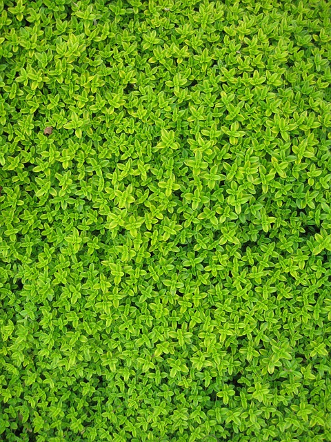 Ivy, Plants, Leaves, Wall, Green, Foliage, Vine, Garden