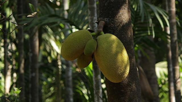 Jackfruit, Fruits, Green, Tree, Nature, Large, Asian
