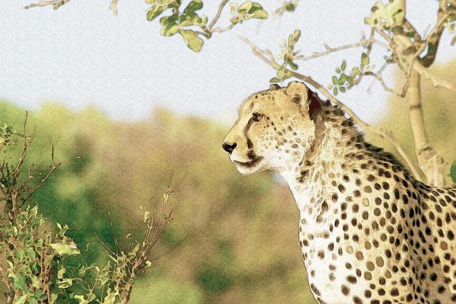 Jaguar, Savannah, Freely, Spotted, Feline