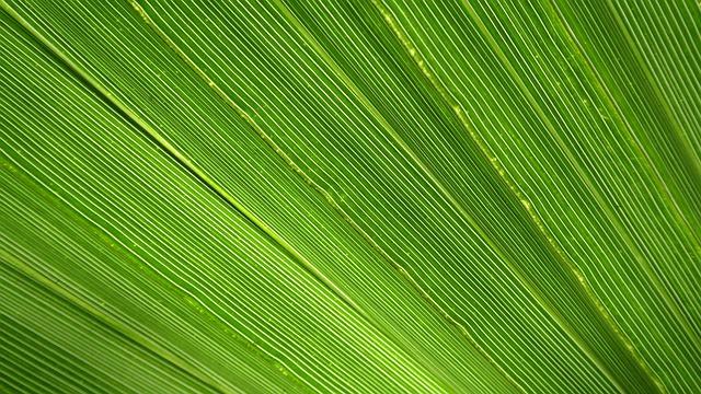 James, Palm, Leaf, Palm Tree, Close, Green, Tropical