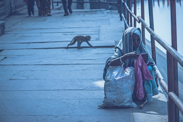 Old Lady On The Jamun Coast, Jamuna, Monkey, Walk
