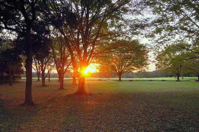 Sunset, Japan, Park, At Dusk, Sun, Natural, Plant