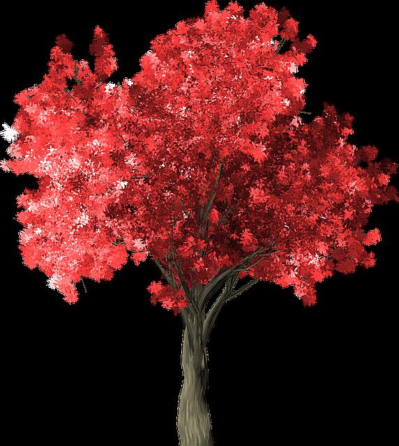 Zelkova Serrata, Tree, Red, Zelkova, Serrata, Japan