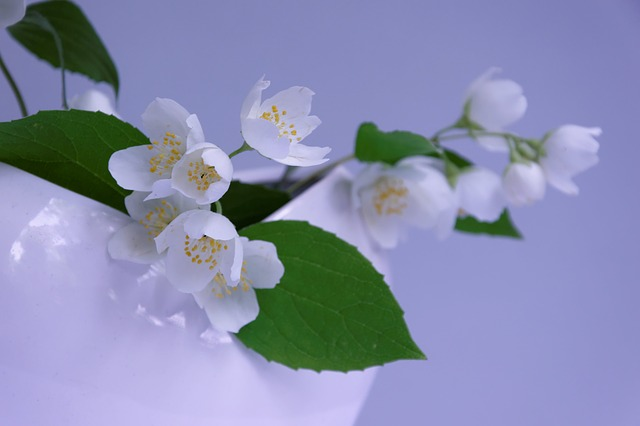 Jasmin, Branch, Fragrance, Smell, Deco, Vase, At Home