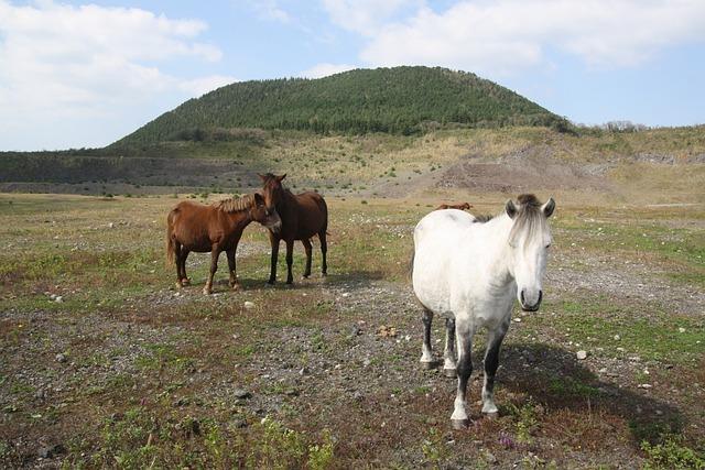 Horse, Ascension, Jeju Island, Cloud, Peaks, Mountain
