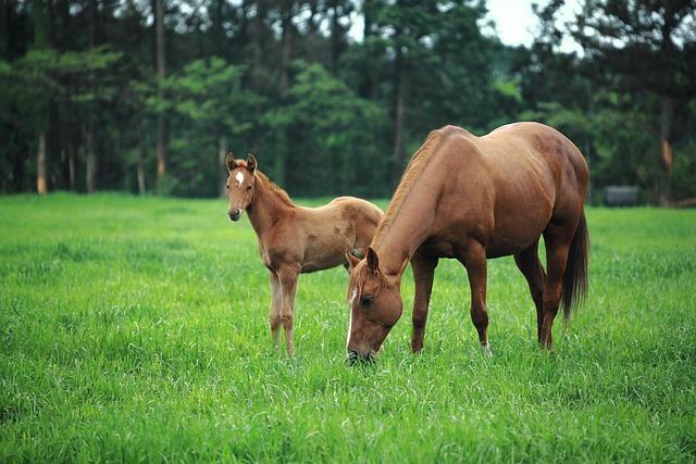 Horse, Jeju Island, Jejuma, Pony, Racehorse, Racing