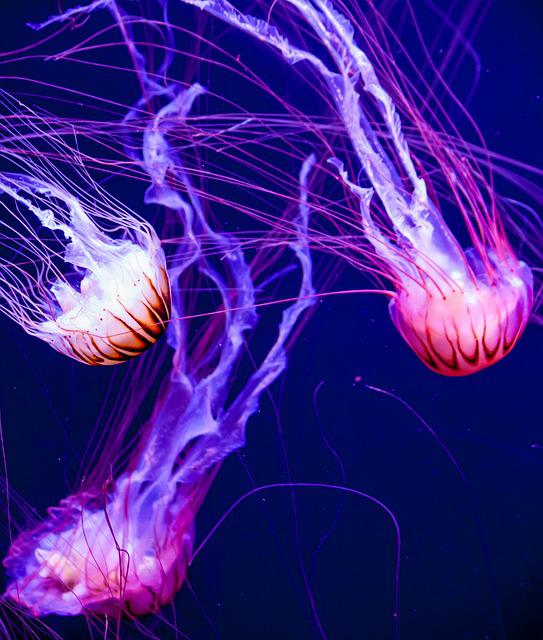 Jellyfish, Glow, Aquatic, Fish, Aquarium, Fluorescent