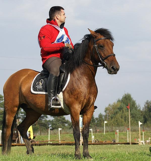 Riding, Games, The Horse, Jeżdziec, Harness, Bridle