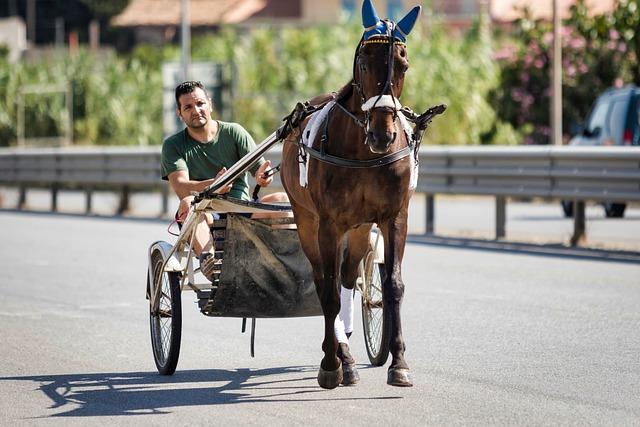 Jockey, Trot, Performance, Horse, Horses, Animal