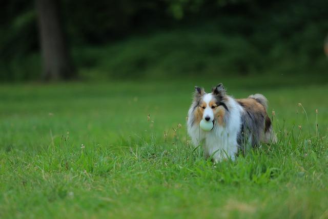 Dog, Training, Park, Grassland, Jogging, Armature Ball