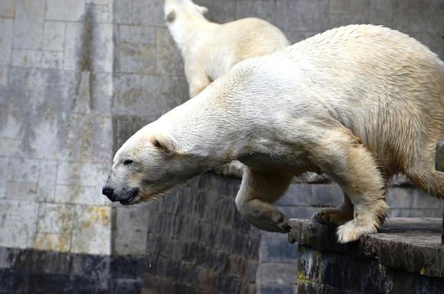 Polar Bear, Jump, Ursus Maritimus, Predator Kind, Bear