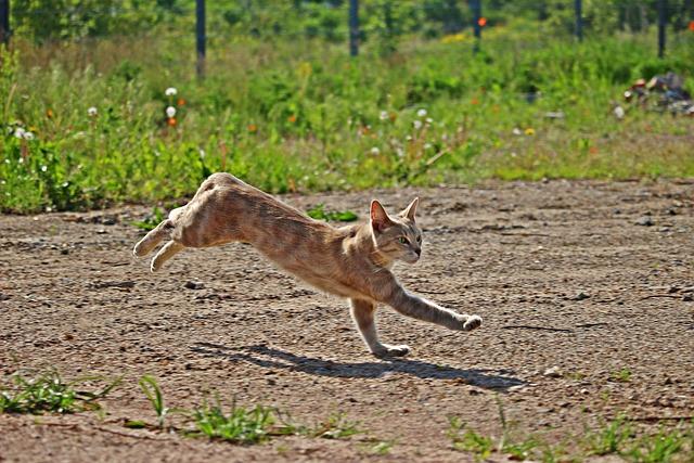 Cat, Tiger Cat, Kitten, Mieze, Mackerel, Jump