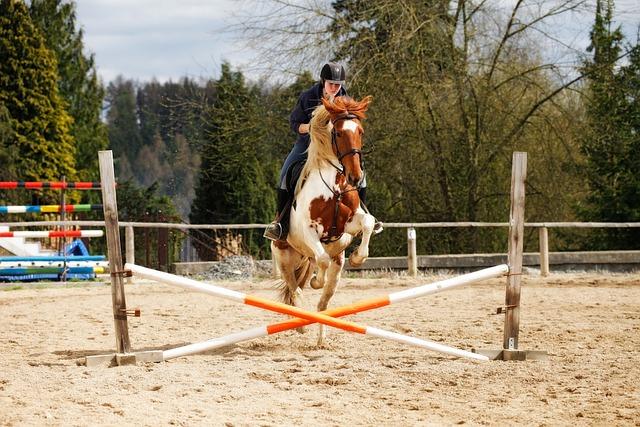Horse, Jump, Obstacle, Jockey, Showjumping, Sand