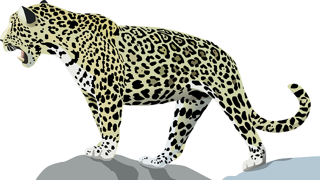 Jaguar, Animal, Cat, Wild, Jungle, Mammal, Feline
