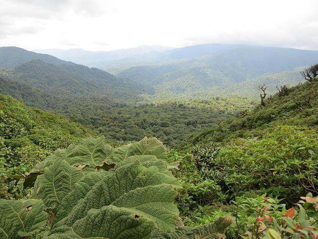 Costa Rica, Monteverde, Jungle